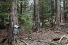 Asbury Woods Maple Festival Scheduled for April 6-7, 2019