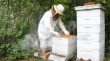 Asbury Woods Presents From Hive to Honey